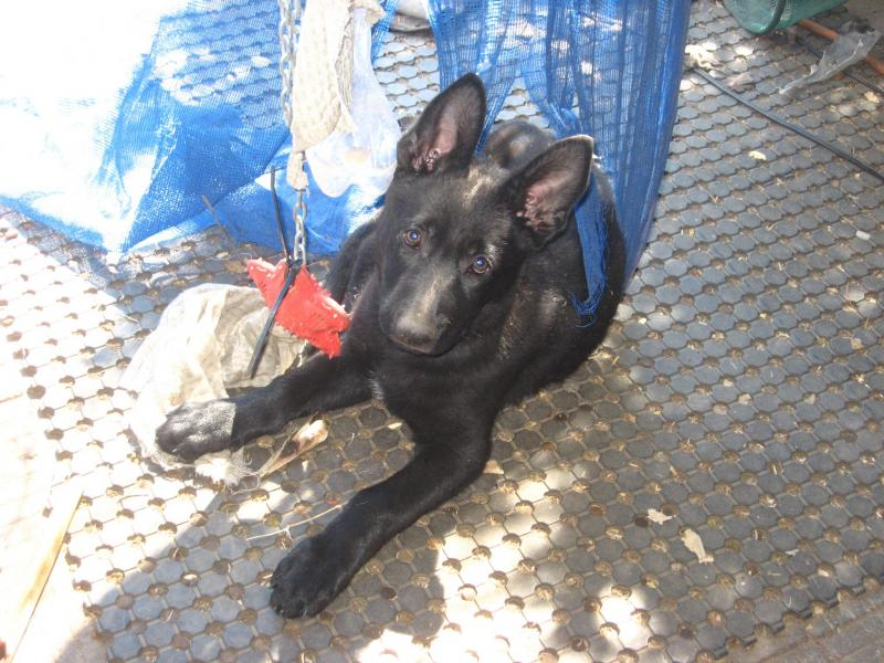 Bella, black female, available